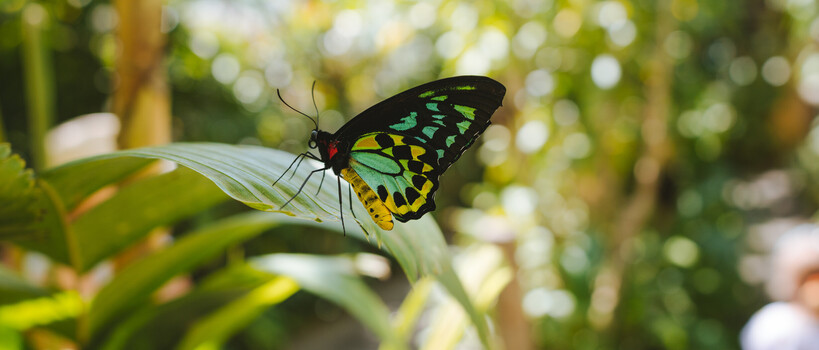 a colourful butterfly at the Cairns Butterfly Sanctuary.