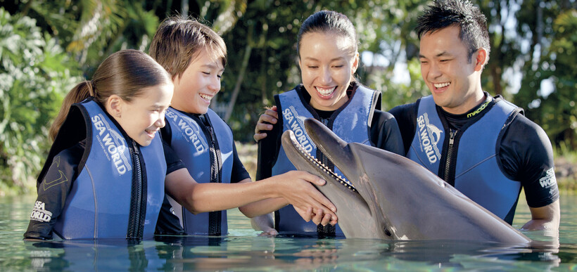 People in the water meeting and patting a dolphin at Seaworld on the Gold Coast