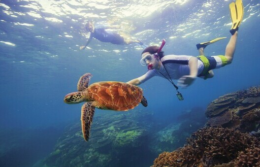a boy snorkelling with sea turtles in the Great Barrier Reef.