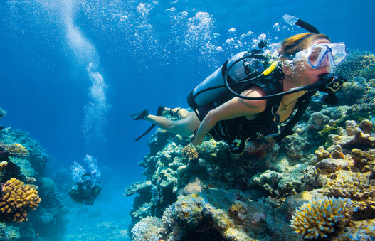 a woman diving and exploring the stunning Great Barrier Reef.