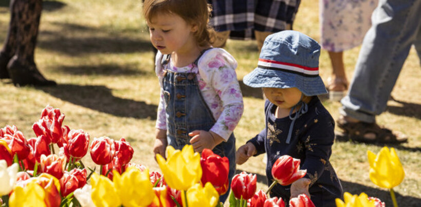 children looking at tulips at Bowral's annual tulip festival