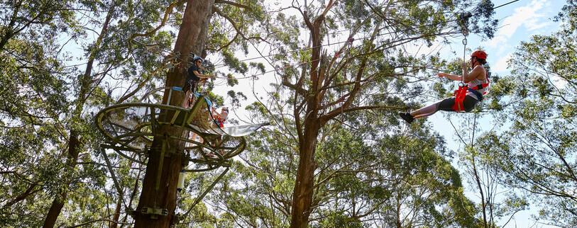 people doing the ziplinetreetop adventure