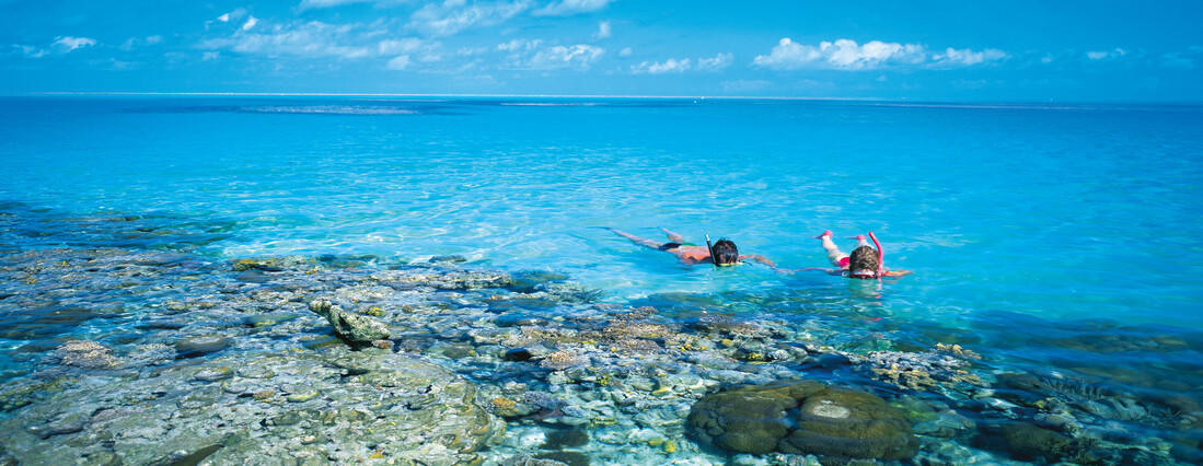 people snorkelling around the beautiful Great Barrier Reef.