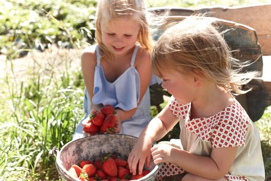 two little children picking apples at Beerenberg Farm in the Adelaide Hills.