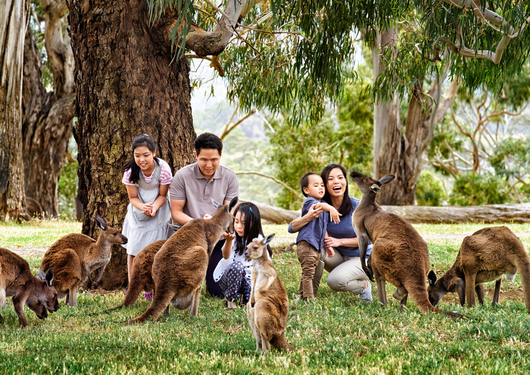 A family hand feeding the kangaroos at Cleland Wildlife Park in the Adelaide Hills