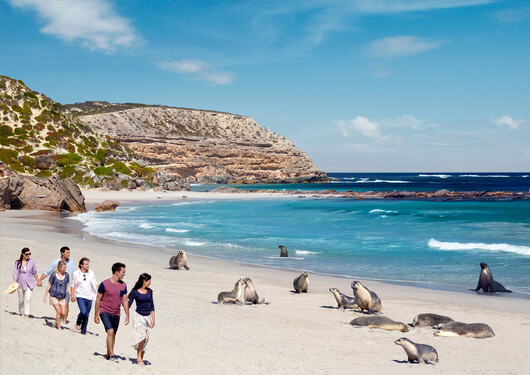 Sea lions and seals lounging around on the beach at Kangaroo Island.