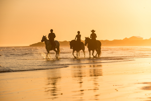 people horse-riding on the beach