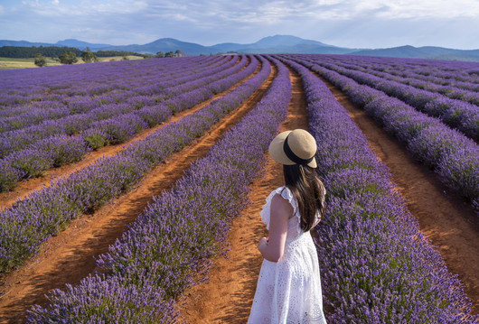a woman standing in the Bridestowe lavender fields