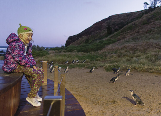 a little girl smiling at the little penguins at Phillip Island Nature Park