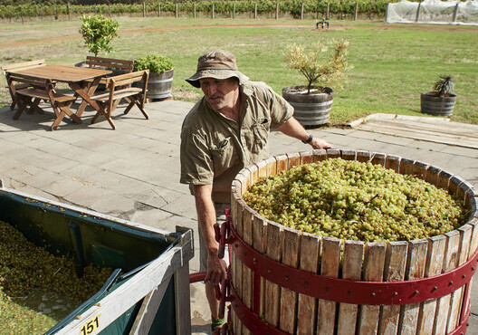 A man lifting a barrel of grapes and preparing them to be made into wine at a winery at Margaret River