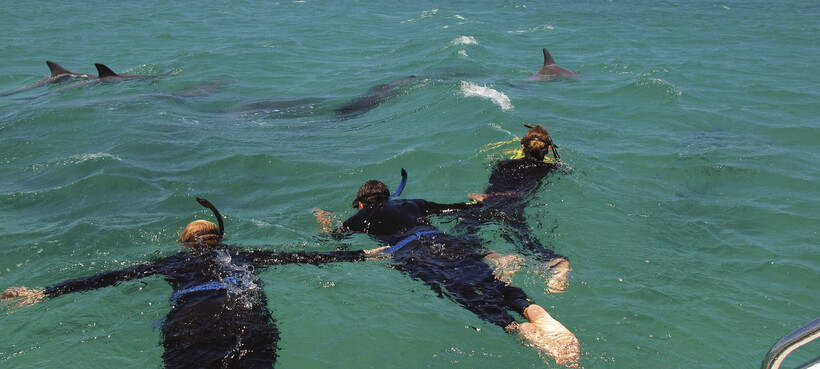 people swimming with dolphins in Rockingham
